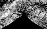 Kmeň sa rozvetvuje – možné cesty nášho osudu